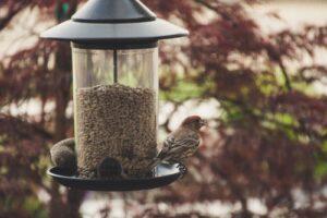 Vogel des Jahres – Bestimme mit